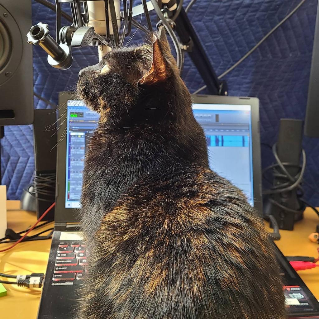 Adorable Tortoiseshell cat in front of studio microphone