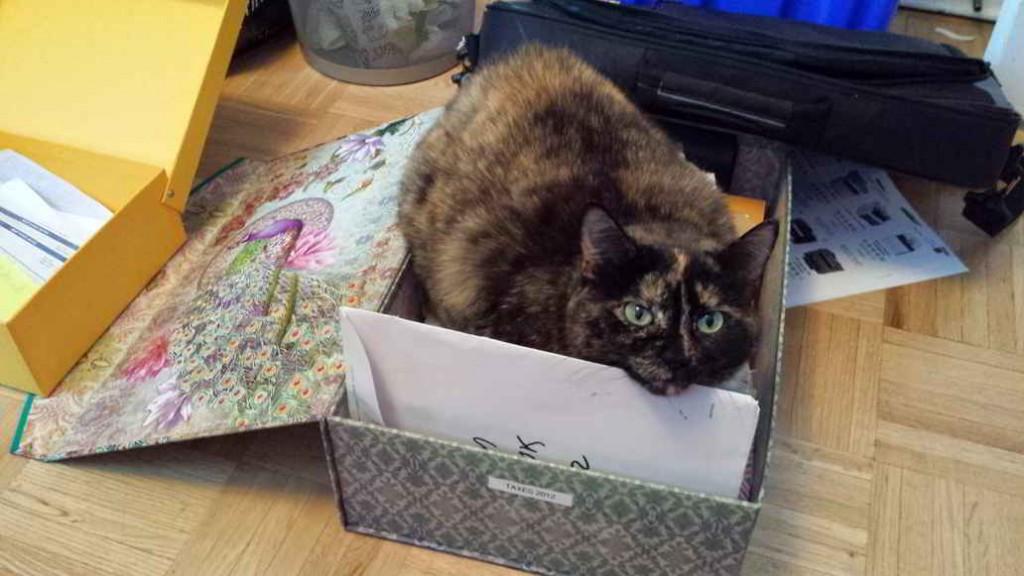 Cat sitting inside a filing box